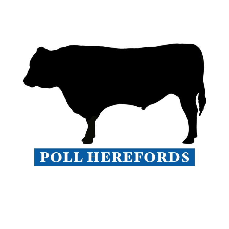 Moora Poll Herefords